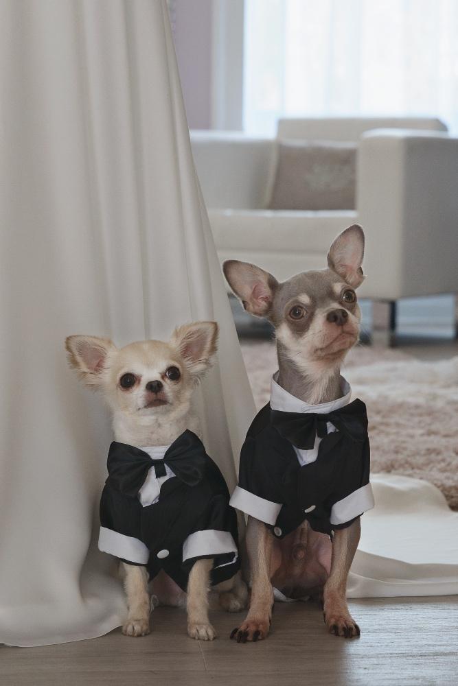 Hugo & Elliot Bridal - Belle Bridal Magazine Supplier Guest List