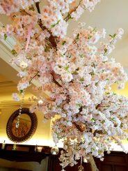 Blossom Tree Hire Company